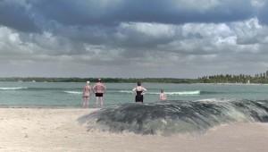 """""""El Sitio de los Sitios"""" es una producción de Faula Films, ganadora del fondo Doctv Latinoamérica y del premio a la mejor película del caribe del Festival Internacional de Cine de Barranquilla. Foto: Faula Films"""