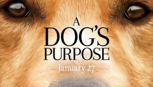 a dog purpose