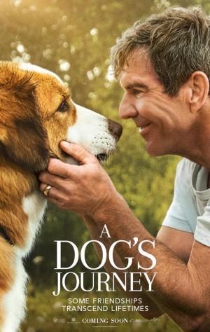a_dog_s_journey